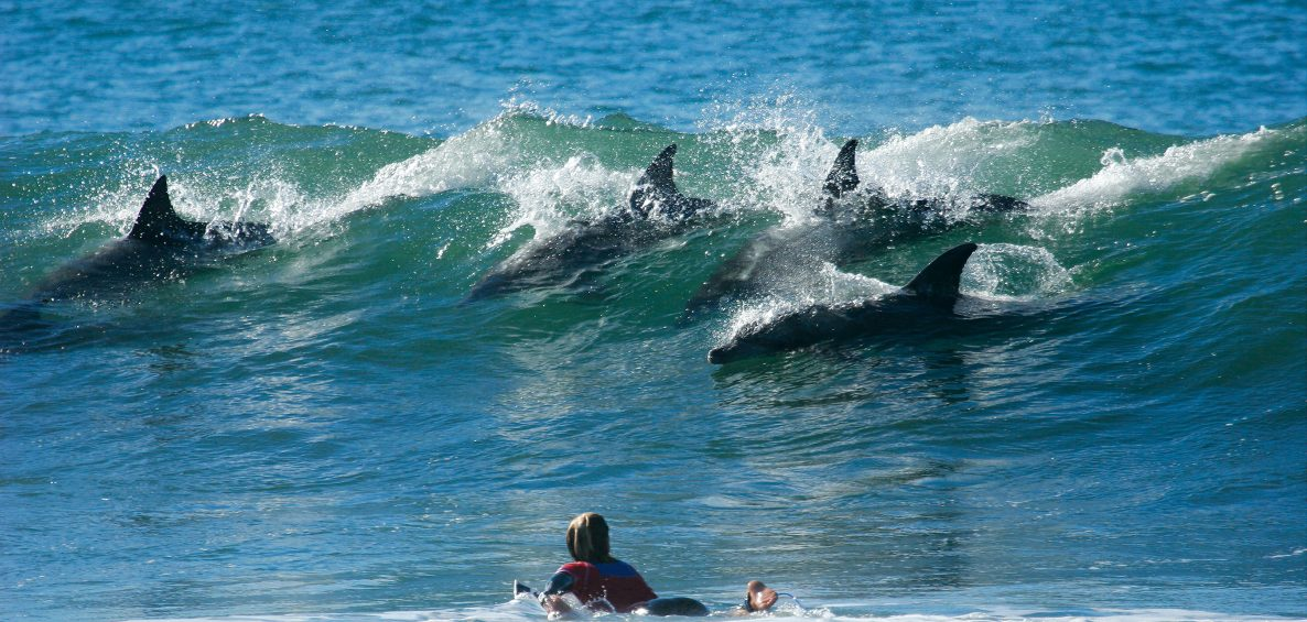 dolphin school shows surfer how it's done
