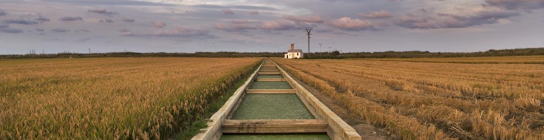 irrigation channel near Bakersfield